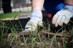 Lawn Grass Maintenance