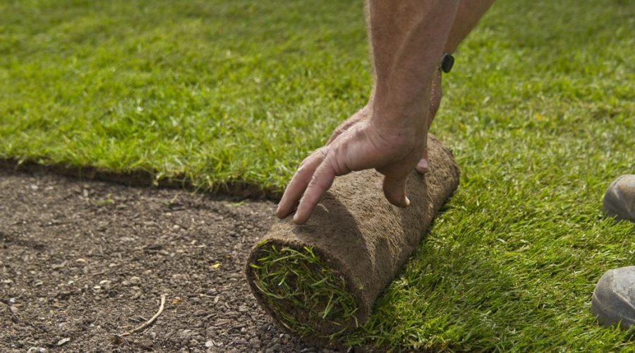 Sodding lawn grass