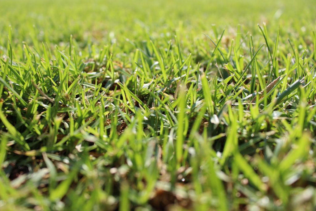 Perfect Grass Lawn by Sodding Canada