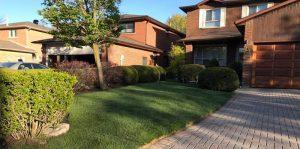 Grass Replacement Company Toronto