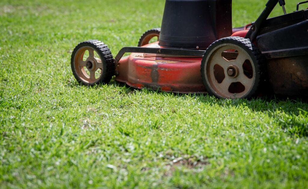 grass maintenance services