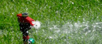 How Long Should You Water Your Lawn?