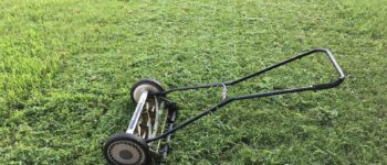 How, When And Why to Dethatch Your Lawn