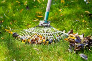 Getting Rid of Crabgrass by Sooding Canada